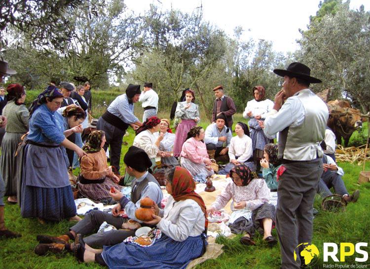 Rancho De Alfarelos Na Apanha Da Azeitona