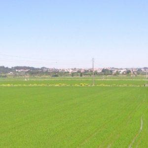 Agricultores Do Baixo Mondego Exigem Conclusão Da Obra Hidroagrícola Em 5 Anos