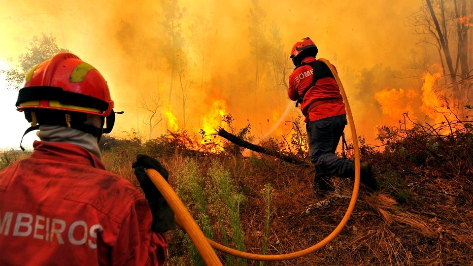 Concelho De Mira Reivindica Intervenção Do Governo Para Recuperar áreas Ardidas Em 2017
