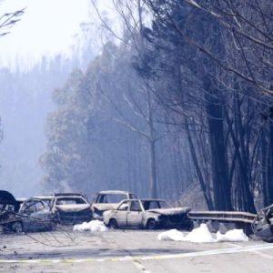 """Relatório Alerta Para """"falta De Ação Na Floresta Da Região"""" Desde O Incêndio De Pedrogão Grande"""