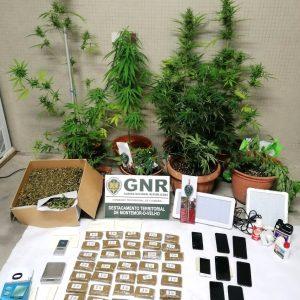 7 Indivíduos De Soure E Montemor-o-Velho Detidos Por Tráfico De Droga